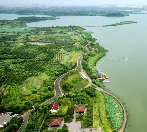 后官湖湿地公园有树林没有_武汉市国家湿地公园添新成员后官湖和安山